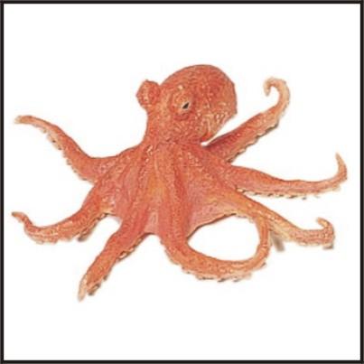 LA COPA MUNDIAL Octopus