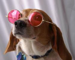 rose_colored_glasses